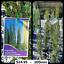 large-Range-of-Conifers-Pencil-Pines-Mudgeeraba-Gold-Coast-283576923041