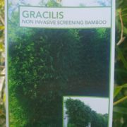 BAMBOO-GRACILIS-SALE-77-big-SLENDER-WEAVERS-screening-GOLD-COAST-NURSERY-SALE-273293776972-4