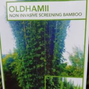 BAMBOO-OLDHAMII-SALE-ONLY-179-CHEAP-BAMBUSA-PLANTS-GOLD-COAST-NURSERY-273051316674-4