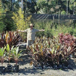Cordyline-Negra-PLANT-GOLD-COAST-Berrigans-Nursery-Cheap-283007770835