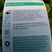 SALE-Viburnum-odoratissimum-CHEAP-PLANT-1650-GOLD-COAST-282876935295-4