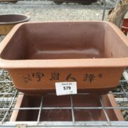 Assorted-Bonsai-LARGE-pots-28-cm-SALE-Bonsai-nursery-Mudgeeraba-Berrigans-Road-273891015037-2