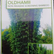 BAMBOO-OLDHAMII-SALE-ONLY-135-CHEAP-BAMBUSA-PLANTS-GOLD-COAST-NURSERY-282831922727-4