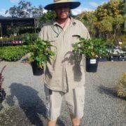 SALE-850-Philodendron-xanadu-PLANT-GOLD-COAST-NURSERY-OVERSTOCKED-283007762608